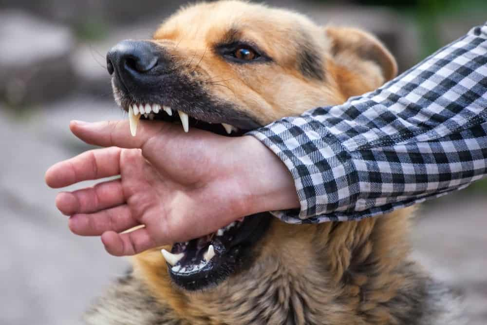Dog biting a person's hand.